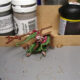 Skaven Screaming Bell Painting VIII