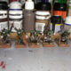 Skaven Stormvermin Painting VI