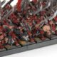 Showcase: Skaven Stormvermin Unit #1